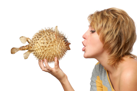 pufferfish_11688990_copy.jpg